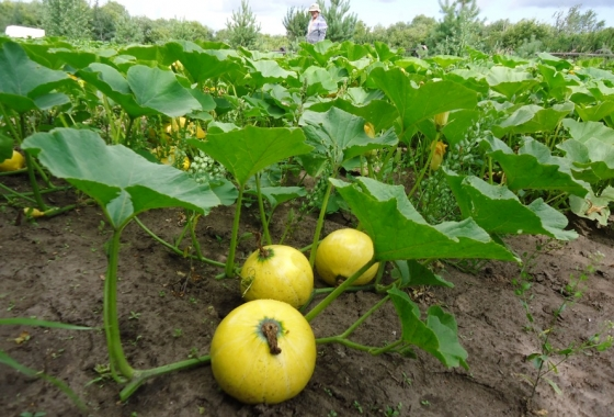 Low Maintenance Crops Are Worth Way More Than The Effort