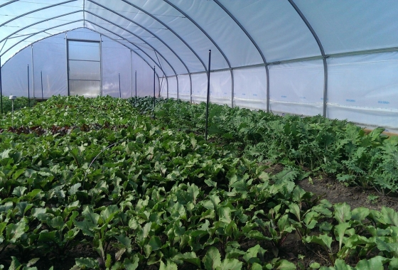 Keep the Soil in Your High Tunnel Healthy