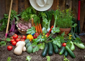 Planting a Vegetable Garden, 101, tips, steps