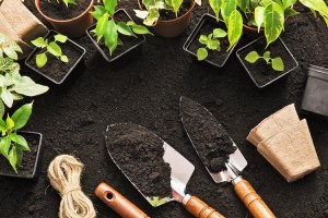 Tips To  Starting a Vegetable Garden for Beginners