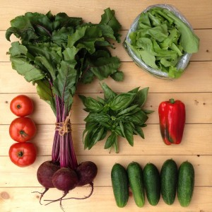 Growing An Easy Beginner Vegetable Garden for dummies