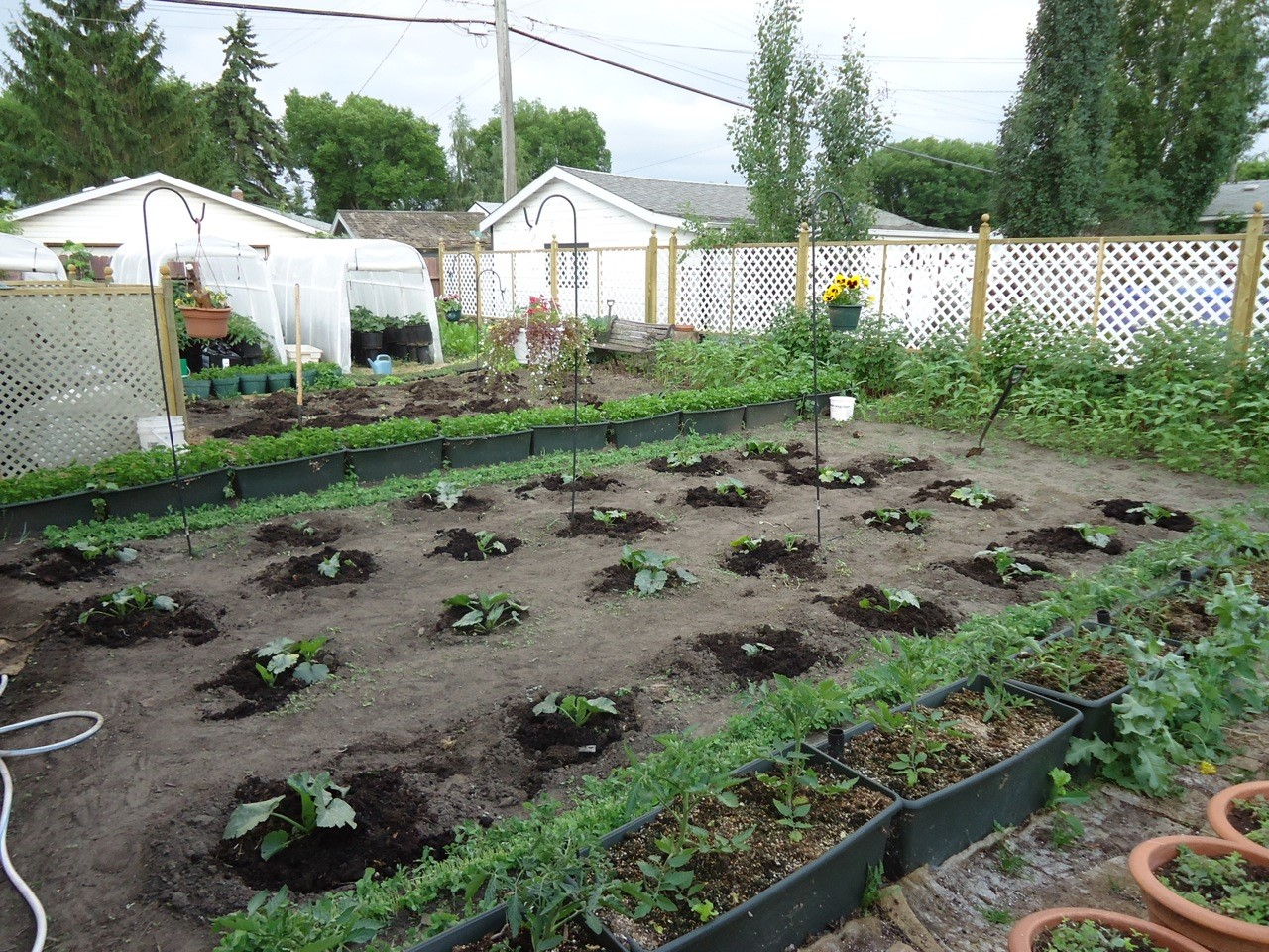 companion planting is good business backyard riches